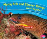 Moray eels shrimp