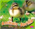 Spring book1